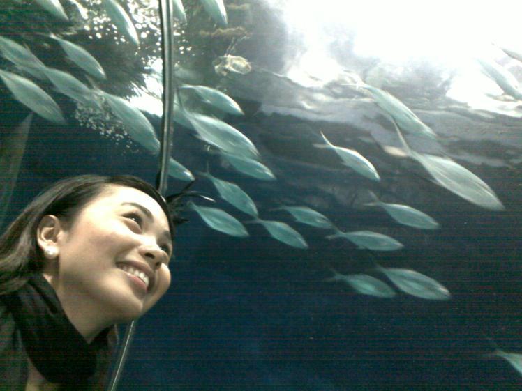 admiring the beauty of under the ocean at Shanghai Ocean Aquarium